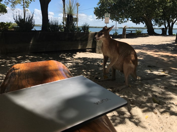 Kangaroo eyeing off the Yoga 900